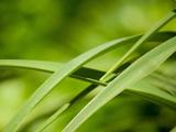پس زمینه برگ سبز طبیعت