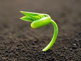 عکس رویش و جوانه زدن گیاه از خاک