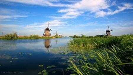 منظره رودخانه و نی زار hd field viwe