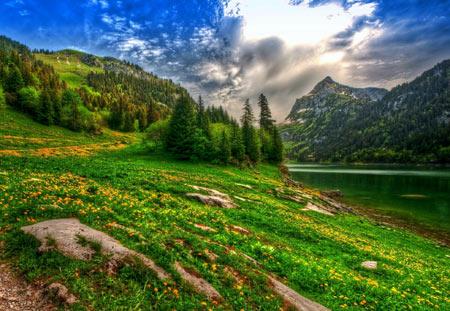 منظره بهاری طبیعت سوئیس lake mountain forest