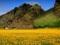 منظره دشت گل در دامنه کوه