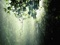 عکس باران در جنگل