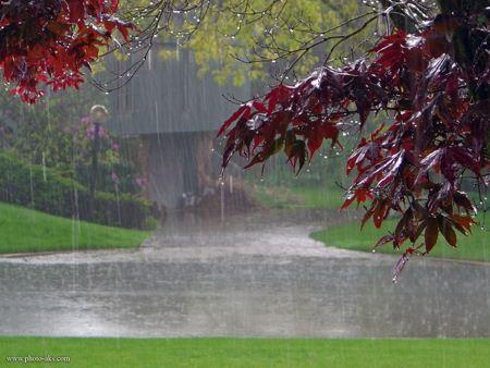 منظره بارانی برگ ها rain tree