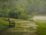 طبیعت و بارش باران در پارک
