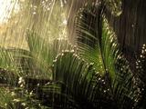 باران روی برگ ها