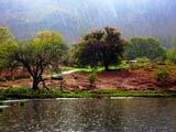 منظره زیبای باران در طبیعت