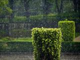 عکس بارش زیبای باران در طبیعت