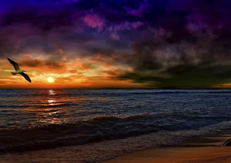 منظره غروب آفتاب در افق ساحل sunset beach view bird