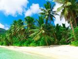 منظره ساحل جزیره استوایی زیبا