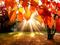 عکس طبیعت پاییز 93