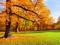 منظره پاییزی پارک
