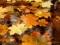 والپیپر برگ های پاییزی