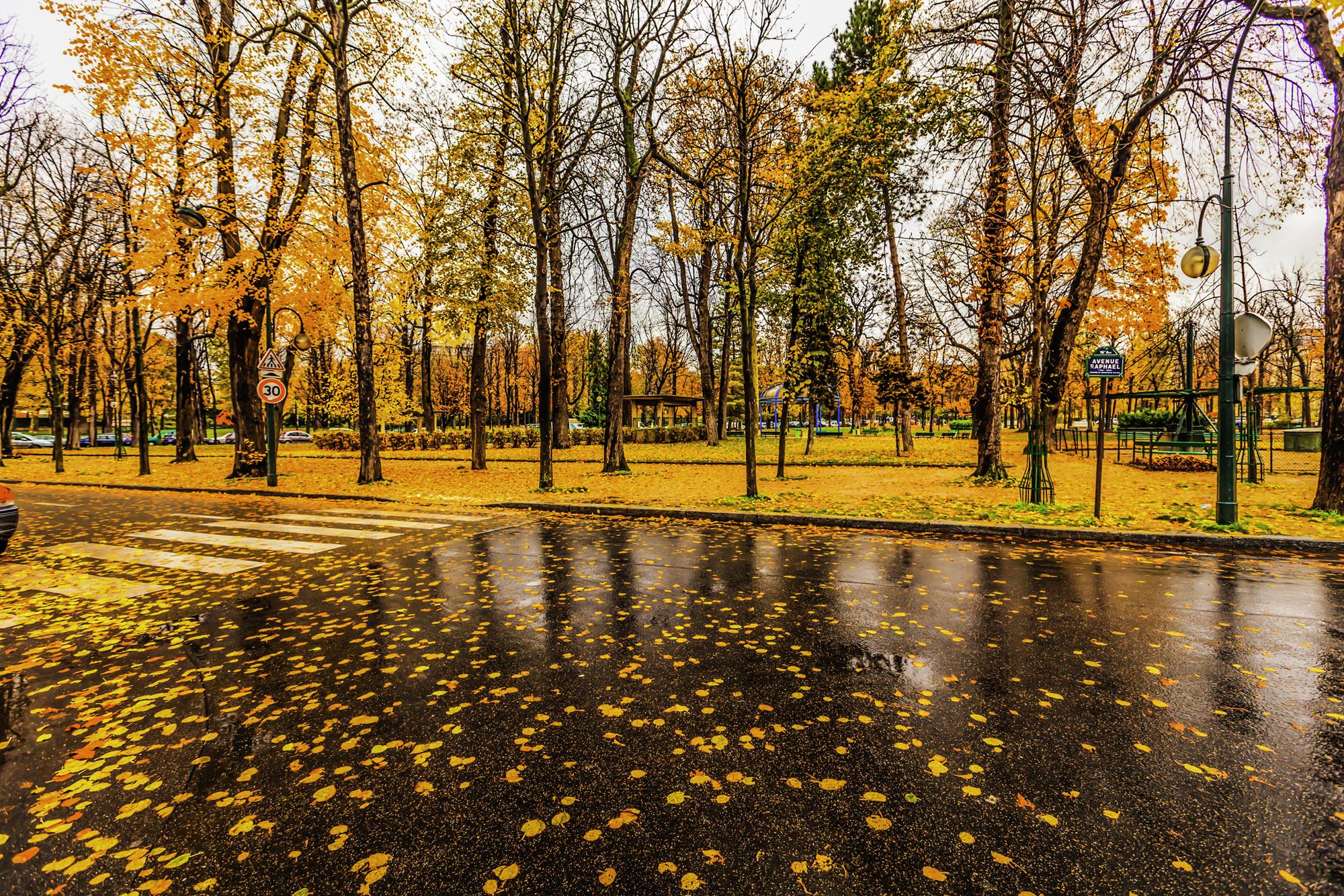 پارک جنگلی بارانی پاییزی پاریس paris raining autumn