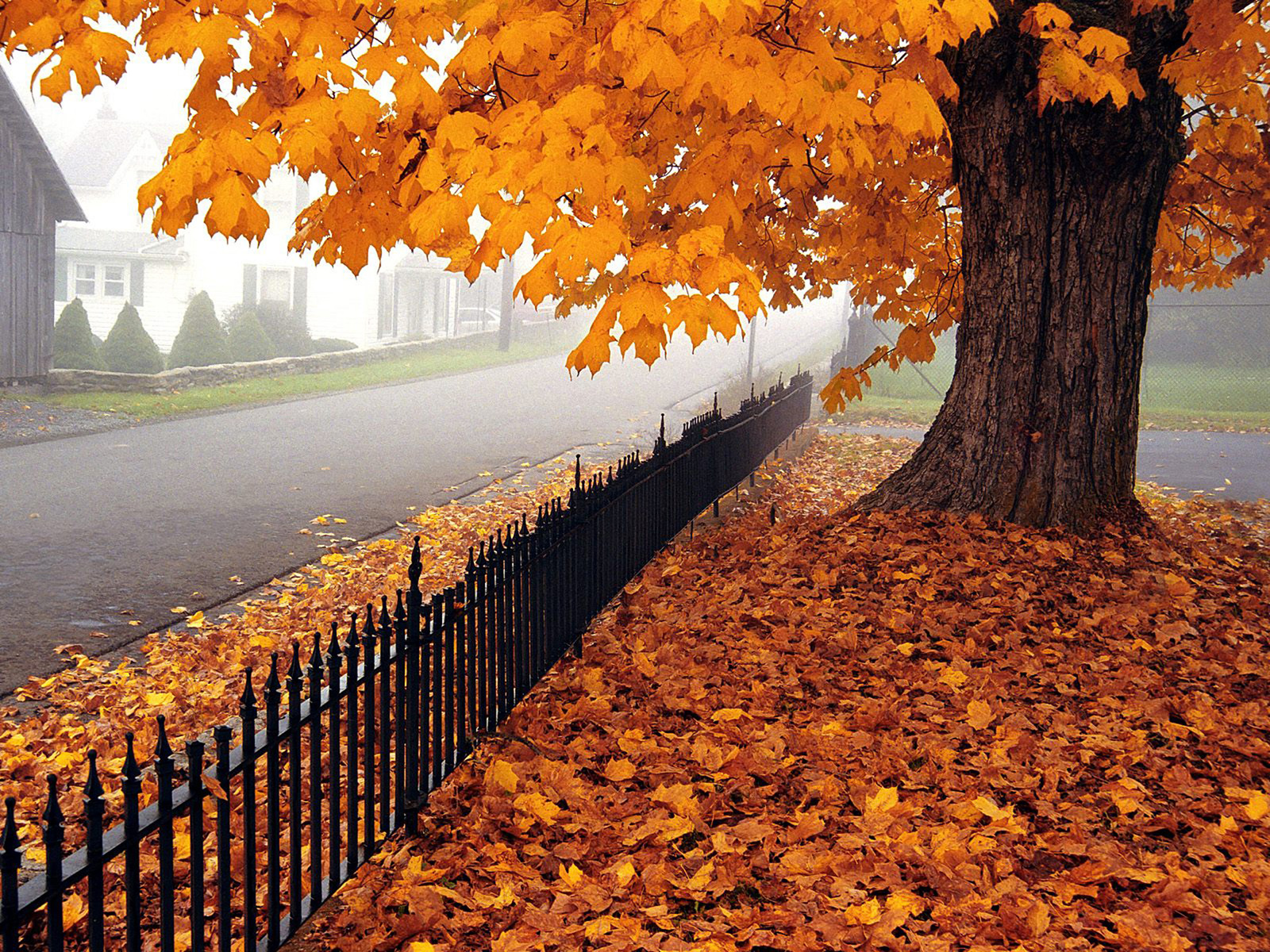 نتیجه تصویری برای تصاویر فصل پاییزی