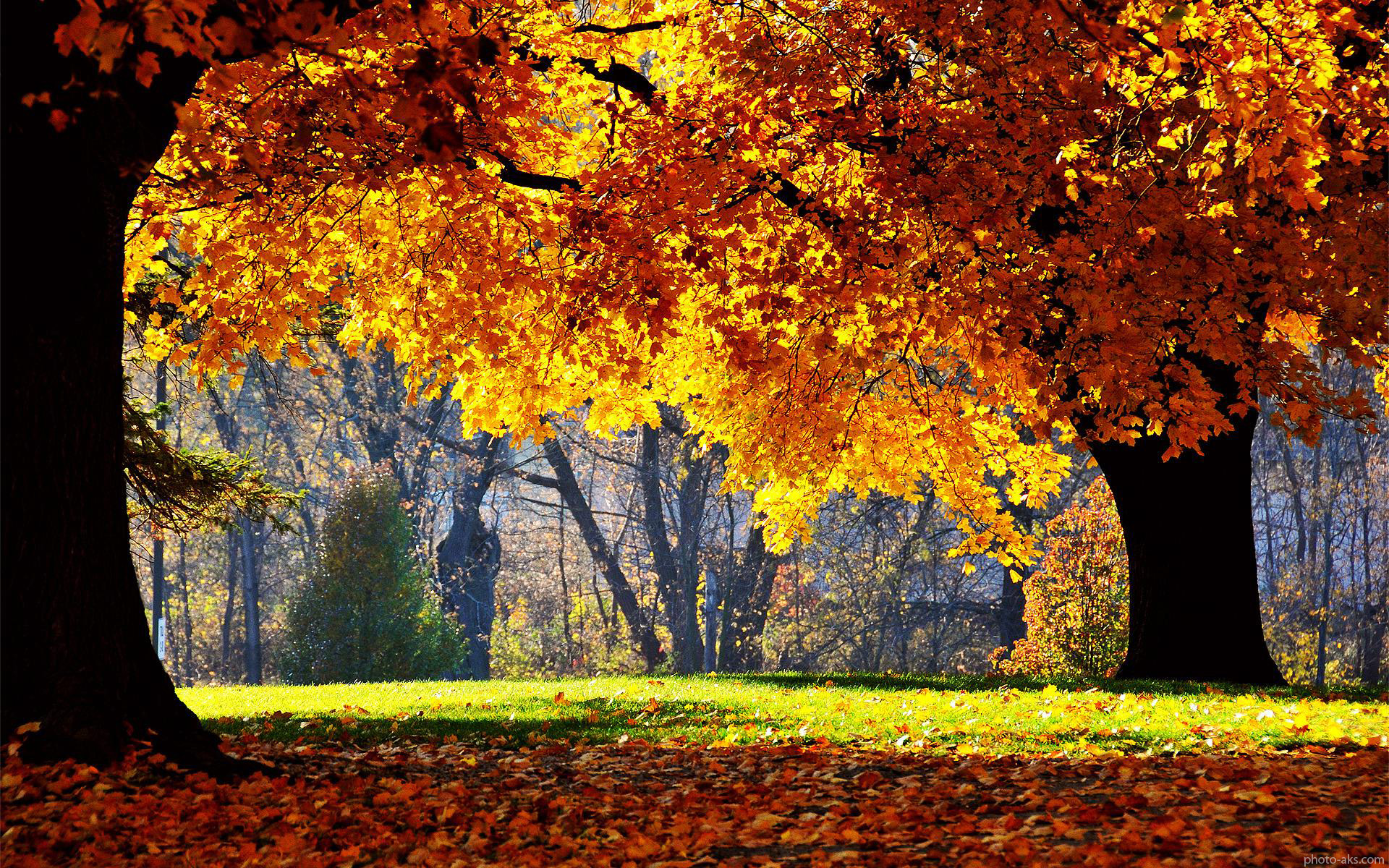http://pic.photo-aks.com/photo/nature/season/autumn/large/golden_autumn_tree.jpg