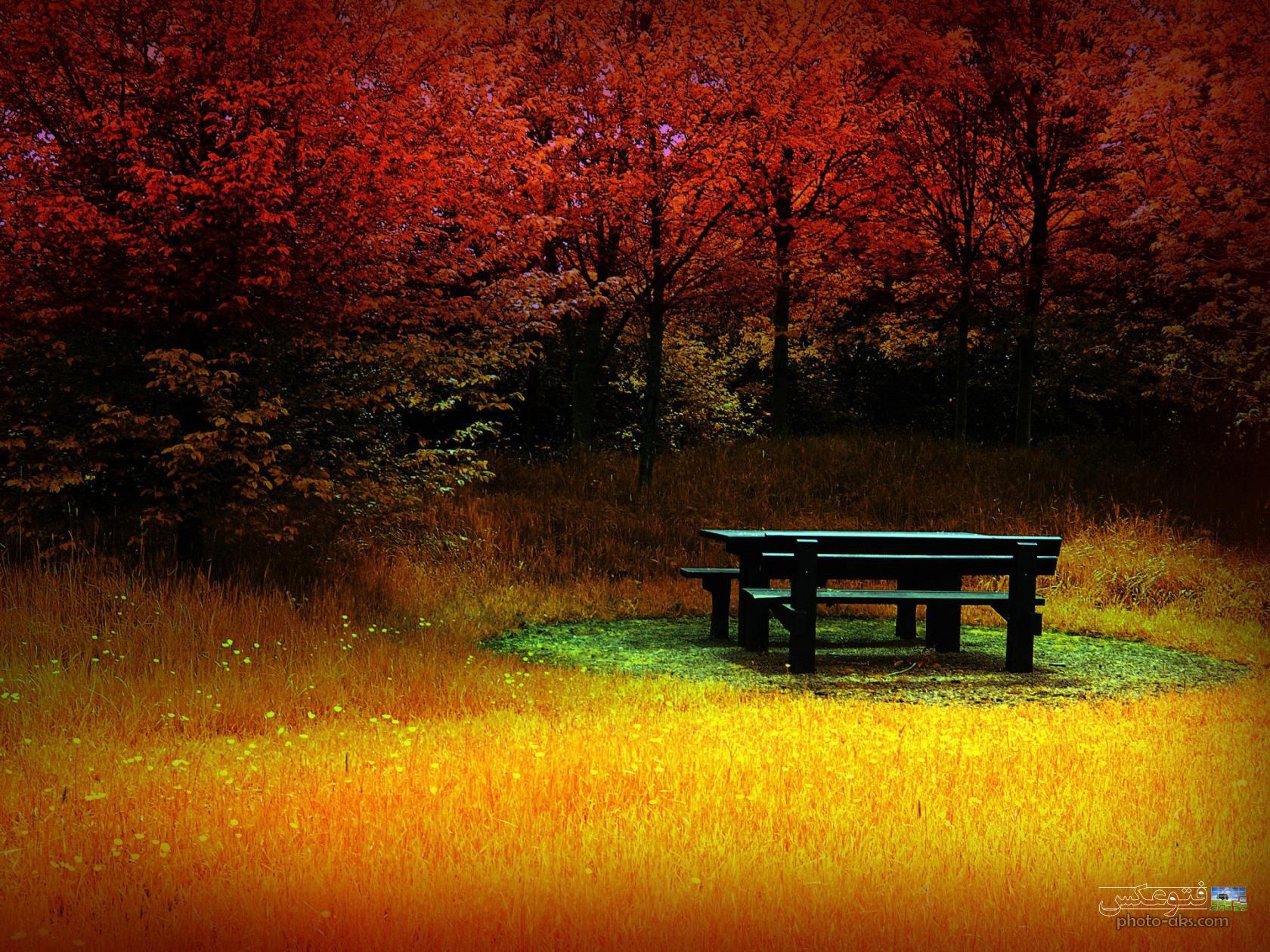 عکس غم انگیز پاییز