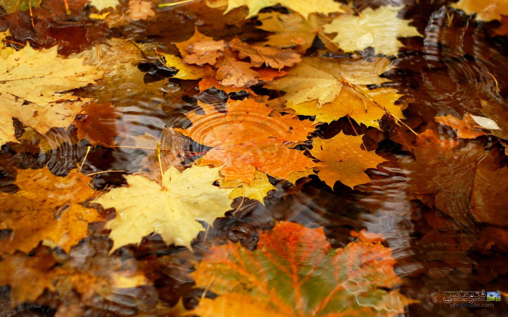 http://pic.photo-aks.com/photo/nature/season/autumn/large/wallpaper_barg_payizi.jpg
