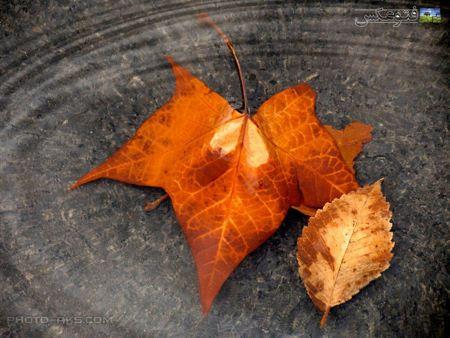 عکس برگ پاییزی autumn leave picture