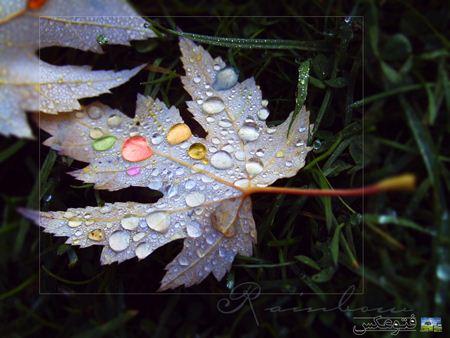 عکس گرافیکی از برگ پاییزی Colorful autumn leaves