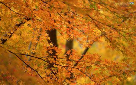 منظره برگ های پاییزی autumn landscape