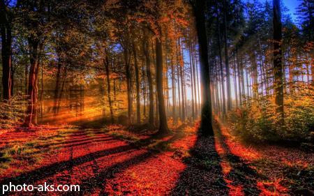 پاییز رویایی در جنگل autumn beauty