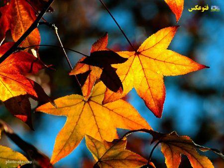 والپیپر برگ پاییزی autumn leave wallpaper