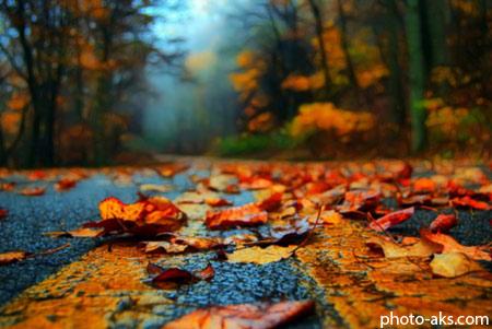 ریزش برگ روی خیابان leaves on asphalt