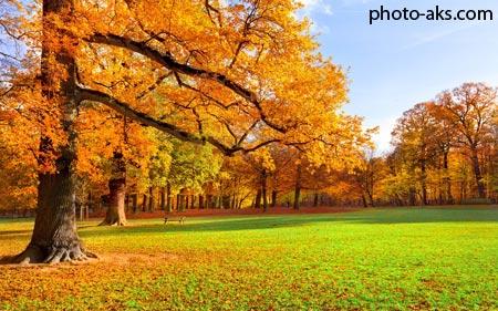 منظره پاییزی پارک park autumn image