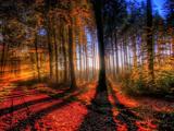 پاییز رویایی در جنگل