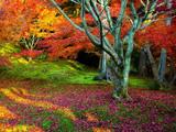 طبیعت پاییز هزار رنگ