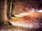 زیباترین منظره درختان پائیزی