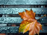 برگ پاییزی روی نیمکت بارانی