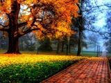 منظره بسیار زیبا درخت زرد پاییزی
