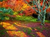 شگفت انگیز ترین عکس های پاییزی