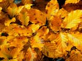 برگ زرد پاییزی