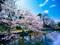 شکوفه های درختان بهاری