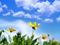 عکس های طبیعت بهاری جدید