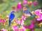 پرندگان آواز خوان در بهار