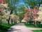 شکوفه های بهاری در پارک