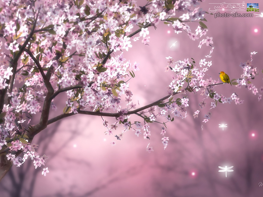 http://pic.photo-aks.com/photo/nature/season/spring/large/pink_spring_nature.jpg