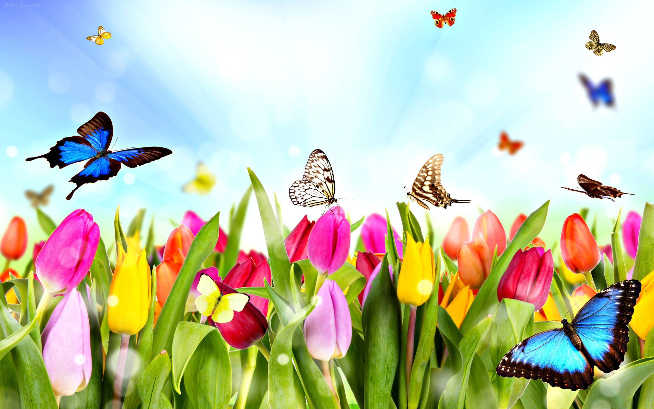 http://pic.photo-aks.com/photo/nature/season/spring/large/spring_wallpaper.jpg