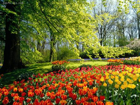 بهار spring wallpaper hd