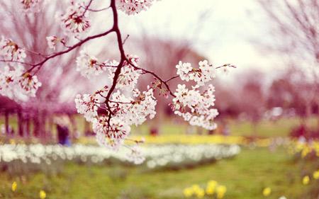 بهار 95 و شکوفه درختان boolms in spring
