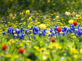 زیباترین مناظر بهاری 92