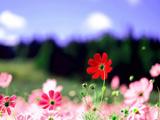 عکس منظره گلهای بهاری