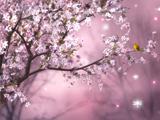 طبیعت گل های بهاری صورتی