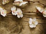 پوستر شکوفه گل بهاری سفید