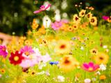 گل های رنگارنگ بهاری
