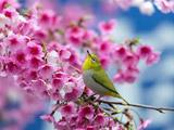 آواز پرنده در فصل بهار