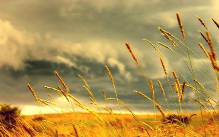 منظره طبیعت تابستانی و گندم summer grain wallpaper